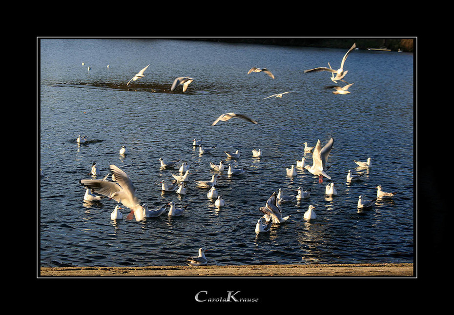 Ravenous Birds