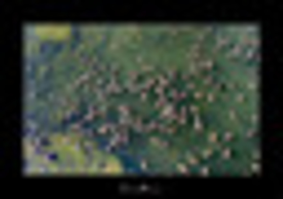 Hundreds of… Rivulet Dwellers