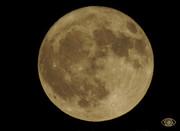 Και μια βραδιά που ντύθηκες ο Άμλετ της Σελήνης Έσβησες μ' ένα φύσημα τα φώτα της σκηνής