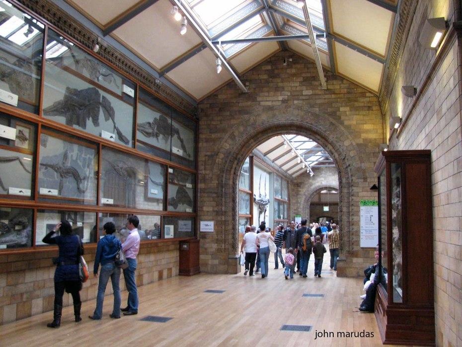 278. 2009 NATURAL HISTORY MUSEUM, LONDON