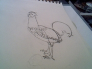 Rooster drawing not ready yet
