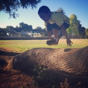 6 yr old Kong over a tree