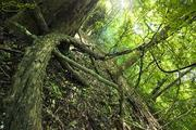 Kaya Forest-Kenya