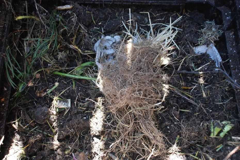 Compost mmmm.