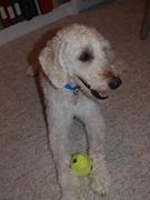 Maxi- foster dog