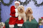 Ned and Clancy with Santa 2015