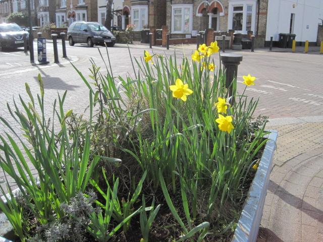 Spring at the end of Myddleton Road