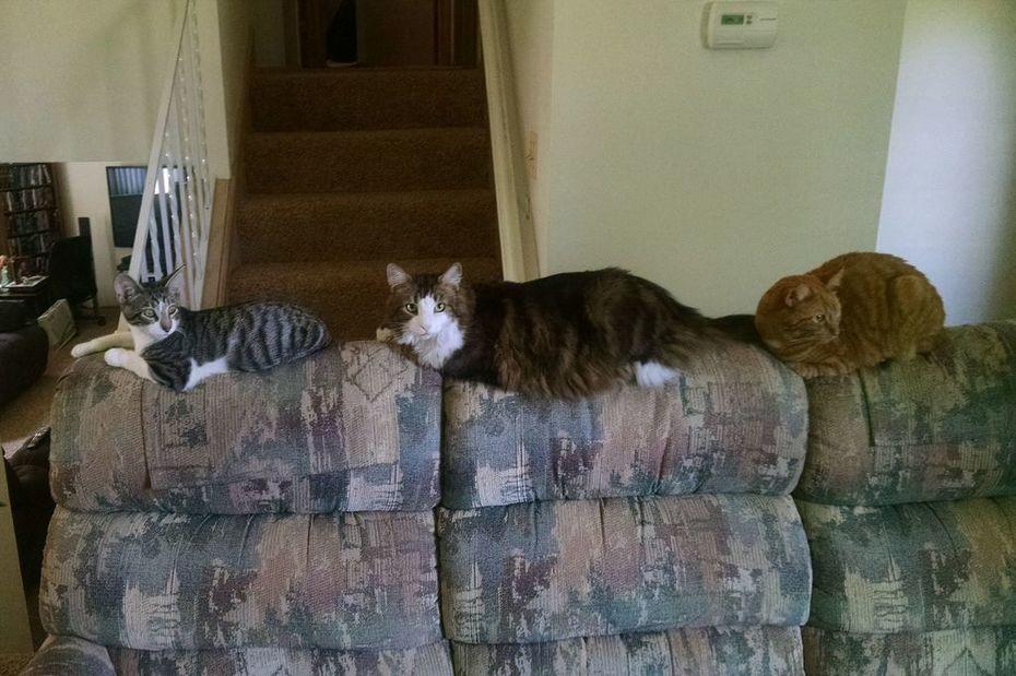 Spooky Morris and Garfield