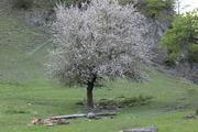 ბარში ყვაოდნენ ხეები