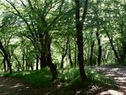 ტყეში შეხიზნული სიგრილე