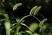 მწვანე ისრები