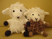 Curly Sheepy