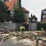 Fallen tree Gladstone
