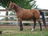 Standardbreds Horse Love…