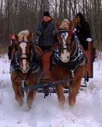 Horse pull Alberta
