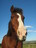 We love horses! =]