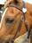 J&M Acres Horse Rescue