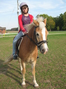 For All Haflinger Lovers!