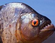 Piranha Group