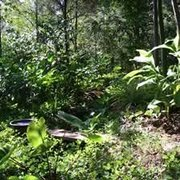 Waiheke Food Forest