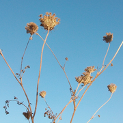 Plantas Selvagens/Wild Plants