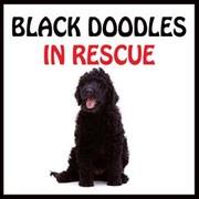 BLACK DOODLES IN RESCUE