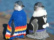 Pinguinpullis für Neuseeland