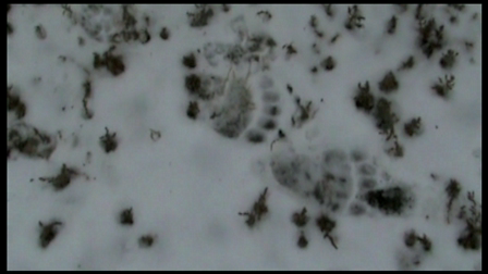 Grizzly Bear Tracks at Cool Works WebShack