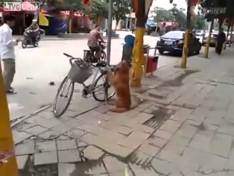 Dog Waits for Owner By His Bike, Watch What Happens Next