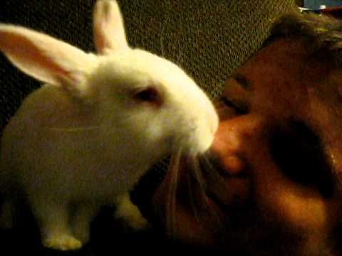 Face Licking Albino Rabbit