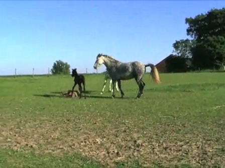 Stallion turned out with his mare and foal