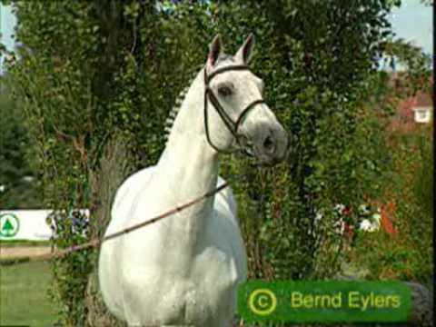Horses: White Horse- Taylor Swift