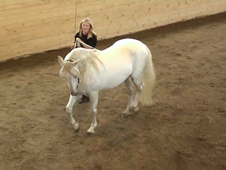 Long Reining 15 Haunches in