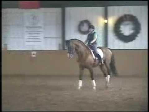 Pacific Star STV - Dutch Warmblood stallion; Approved CWHBA