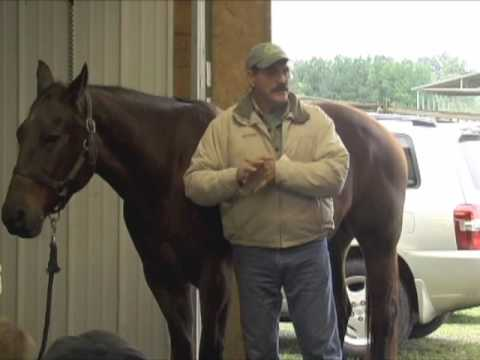 Bladder Meridian: Connecting with your Horse with Your Hands