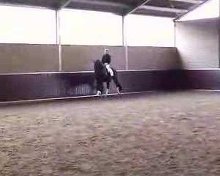 This is How You Practice a Dressage Freestyle