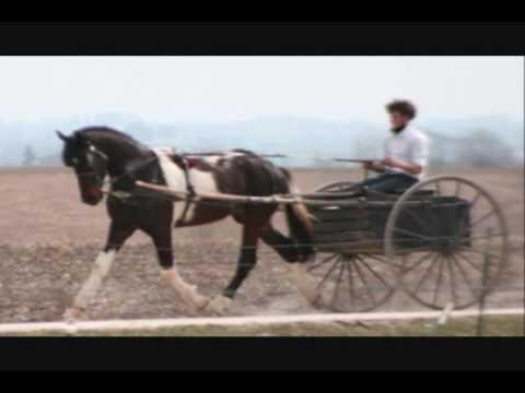 Marcoli Driving Horse