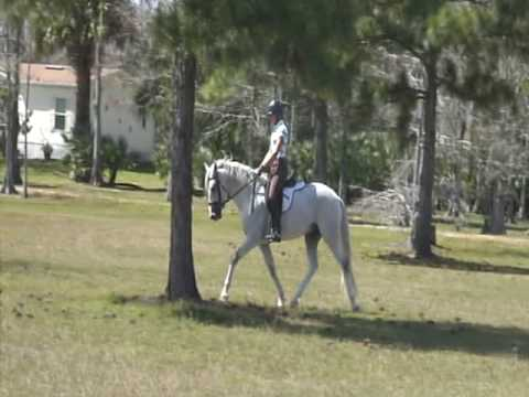 Training the young classical dressage horse.