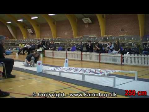 Show Jumping Rabbits - 2010 Danish Championships