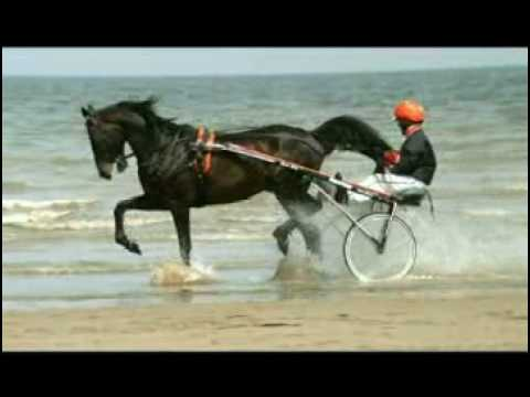 A Beautiful Commercial for Harness Racing