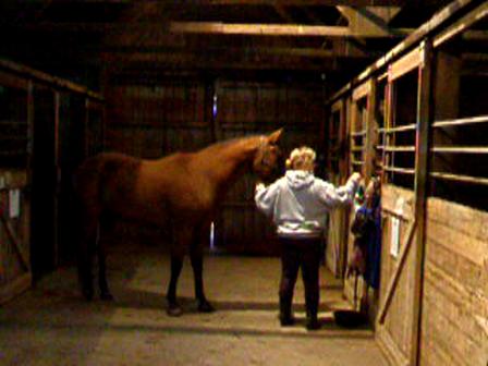 horses fall 2010 118