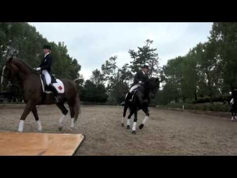 6 horse Dressage Quadrille
