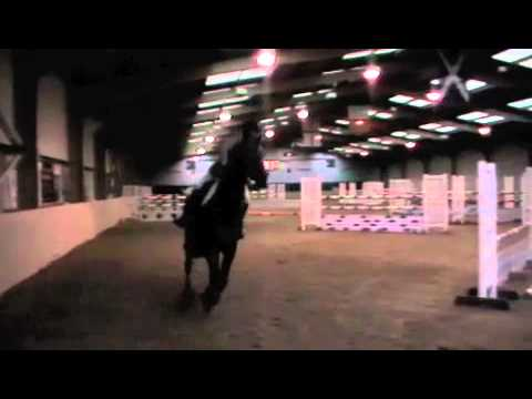 Black Jack & Collin go Show Jumping