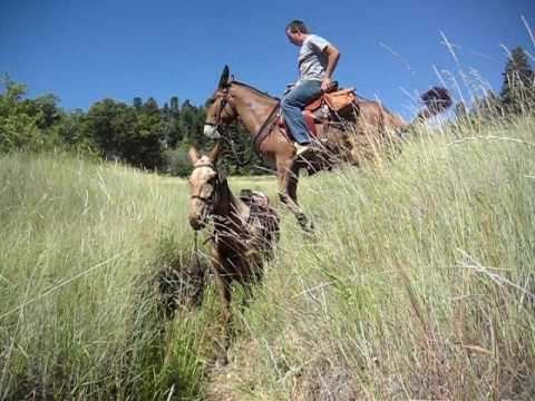 This is How You Jump a Mule Over Another Mule
