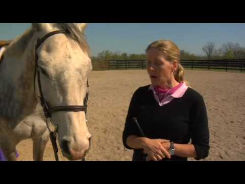 Thoroughbred Race Horse Rehab