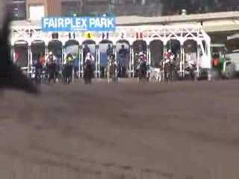 Ever Seen Mule Racing at the Track?