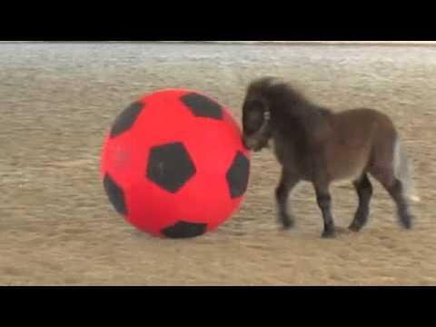 Baby Mini Discovers Balls are Fun!