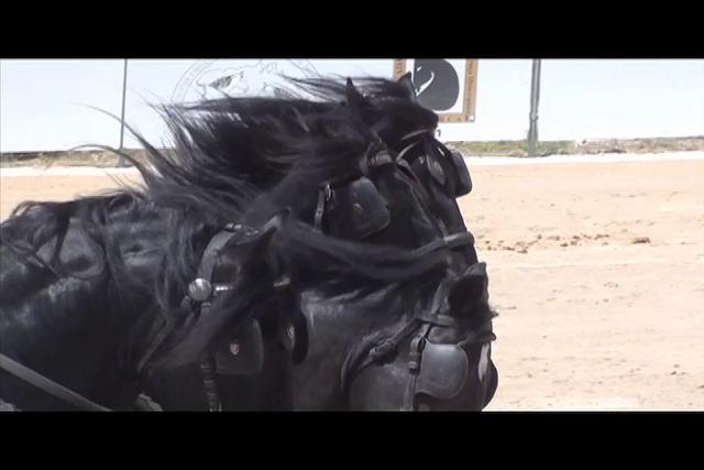 An Exhibition of the Pura Raza Menorquina Horse