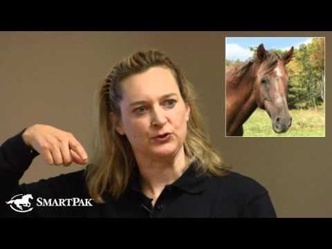 Senior Horse Strategies Part 2: How Does the Body Change With Age