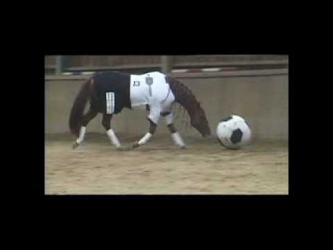 Meet Germany's New Soccer Star- A Horse!